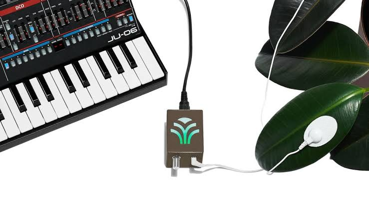 All You Need To Know About 'Music For Plants' - Score Short Reads